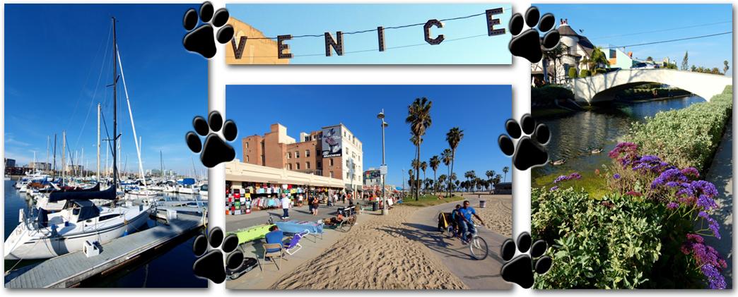 MDR Venice pic